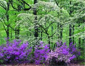 Accent Design Pllc Landscape Architect Raleigh